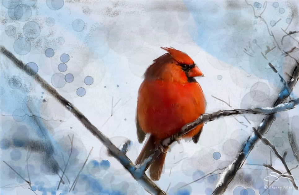 Northern Cardinal in Winter, Central Park 12/29/2011