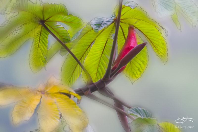 Panamanian Tree, Boquete, Panama 5/28/2014