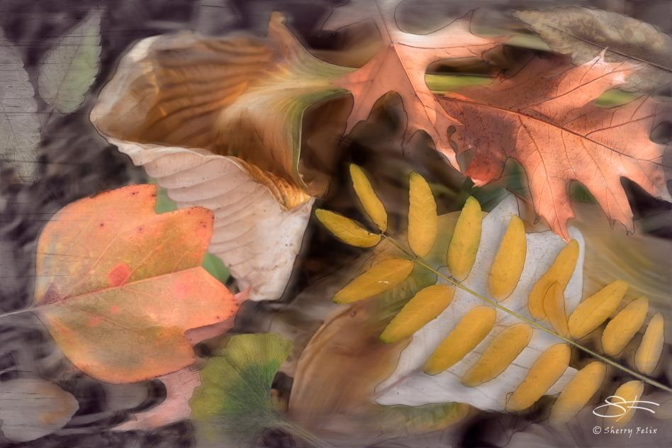 Leaves, Greenwich Village11/20/2014