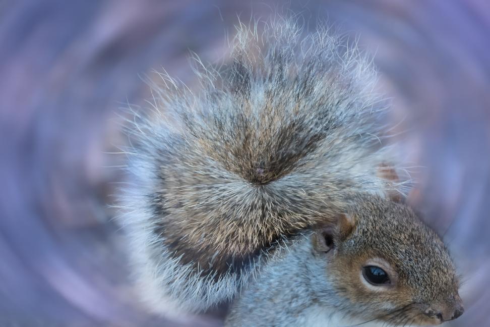 Squirrel Swirl, Central Park 1/13/2015