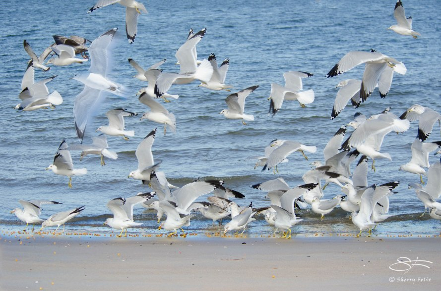 For most gulls it was not flying that matters, but eating.