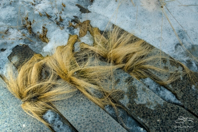 High Line's Grasses 3/9/2015