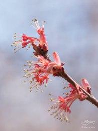 Spring bud 22, April 11, 2015