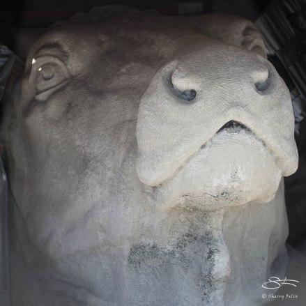 Cow Head, Hudson NYC April 13, 2015