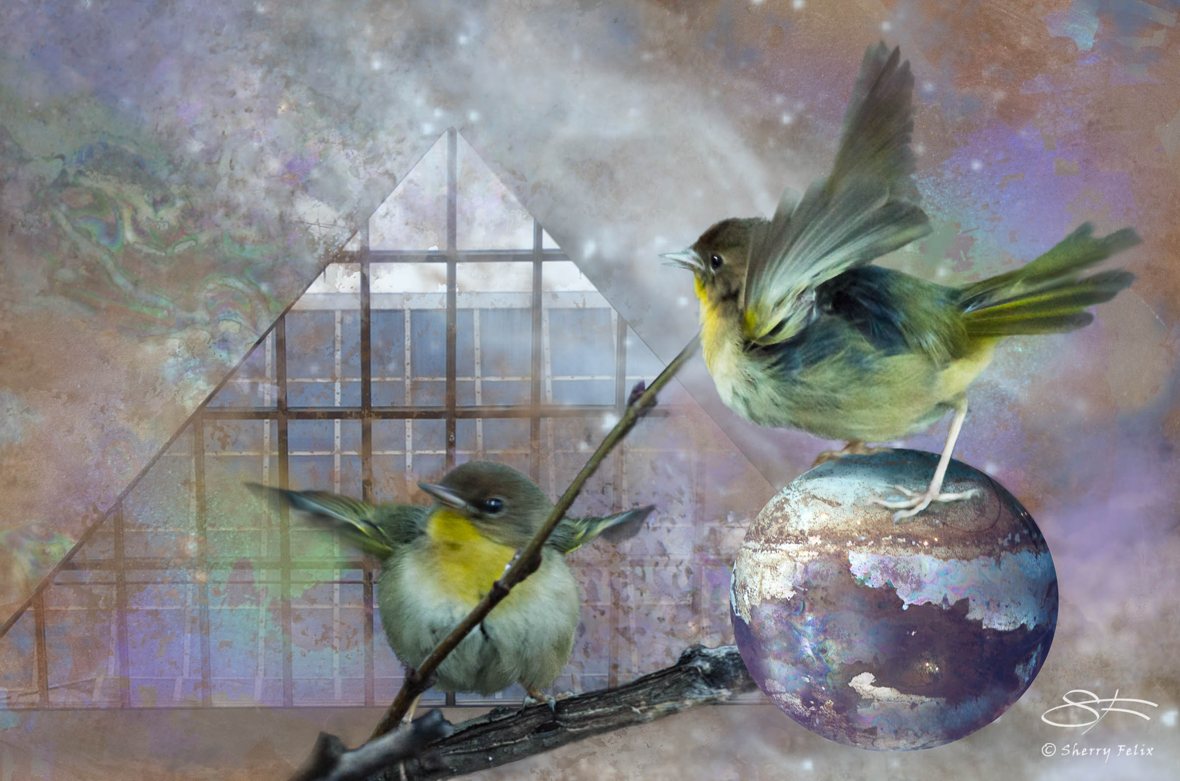 Yellowthroat in an Iridescencent Universe 1/24/2014