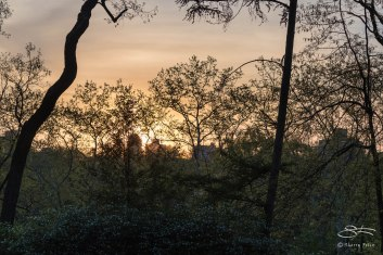 Central Park at Dawn, 5/5/2015