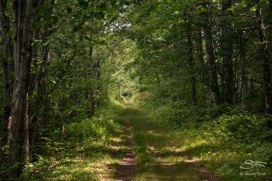 Path parallel to South Road, Bashakill WMA, Sullivan County, NY 6/6/2015
