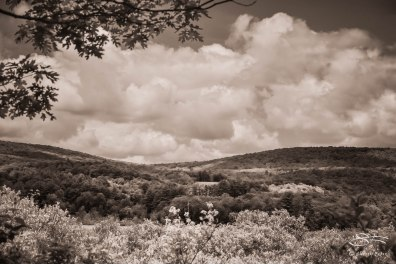 Bashakill WMA by the Shawngunk Mountains, 6/6/2015