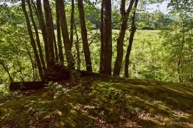 Path parallel to South Road, Bashakill WMA, Sullivan County, NY 6/6/2015