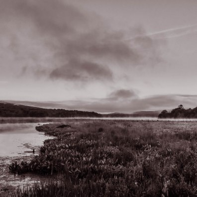 Beaver lodge at dawn, Bashakill 6/7/2015