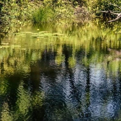 D&H Canal Linear Park, Sullivan County NY 6/7/2015
