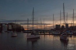 Rushcutters Bay dawn July 26