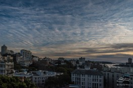 View of Rushcutters Bay at dawn from William Street July 26