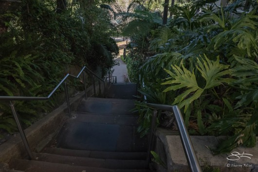 Holdsworth Avenue steps to Rushcutters Bay Park July 26