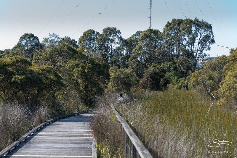 Narawang Wetland