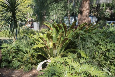 Ferns at Circular Quay