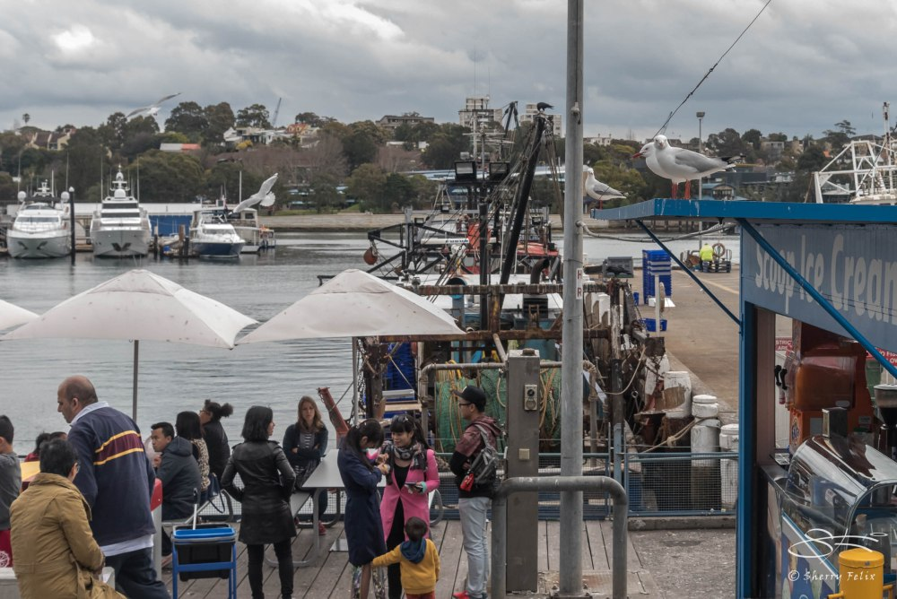 Sydney Fish Markets (3/6)