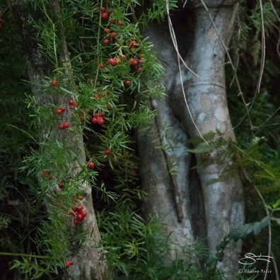 Berries at Fisher Bay