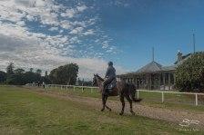 Horse riding in Centennial Park