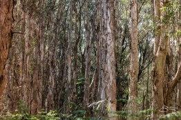 Lachlan Swamp, Centenial Park