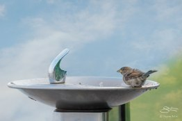Sparrow's Fountain