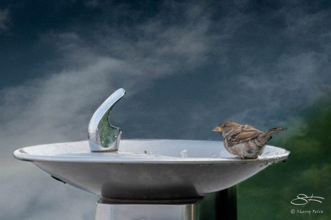 Sparrow's Fountain