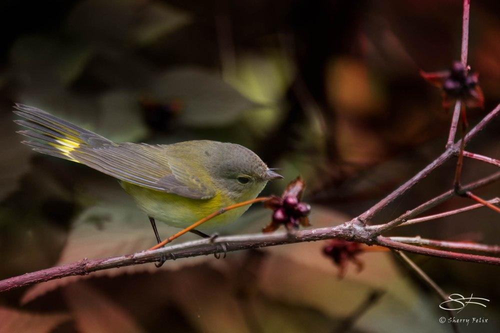 Birds in Autumn (2/6)