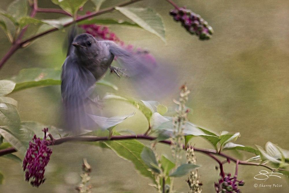 Birds in Autumn (3/6)