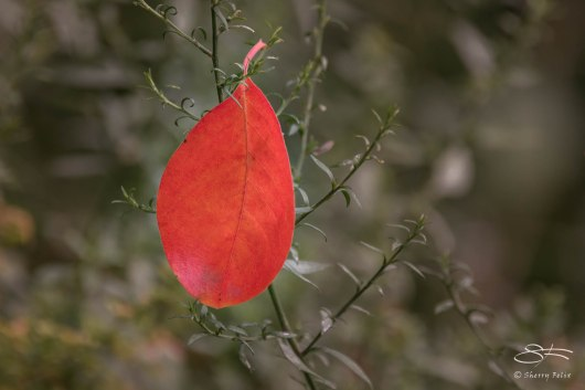 First Leaf of Fall, Central Park 9/12/2015