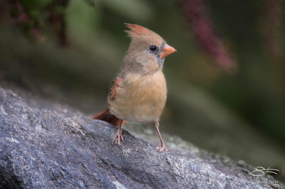 Birds in Autumn (5/6)
