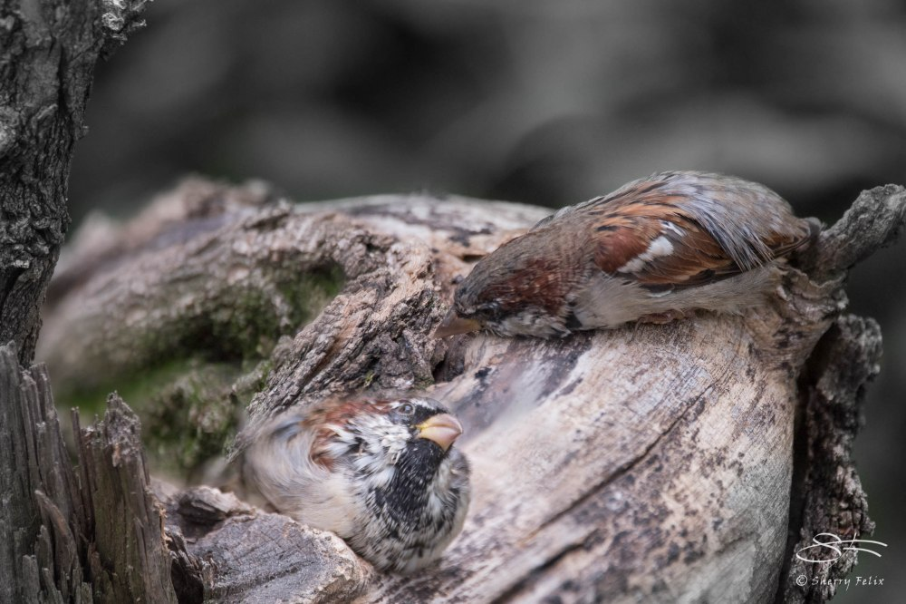 Birds in Autumn (6/6)