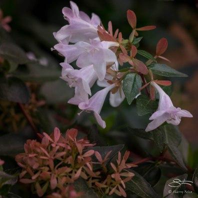 Pink, St Lukes Garden