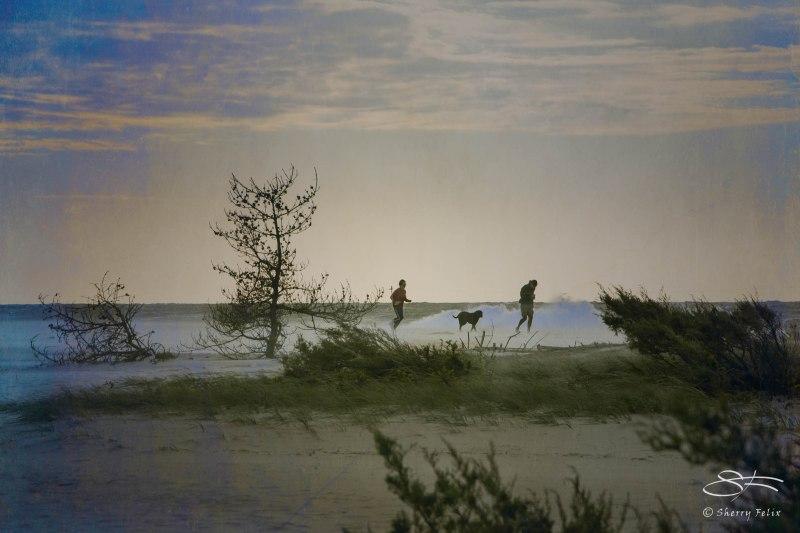 20111015 Fire Island w Linnaean 04sf