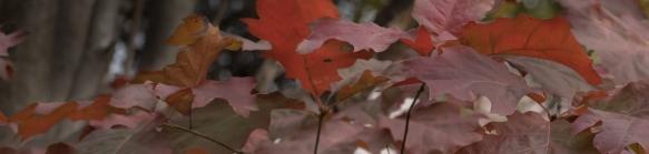 Leaves, Central Park 11/24/2015