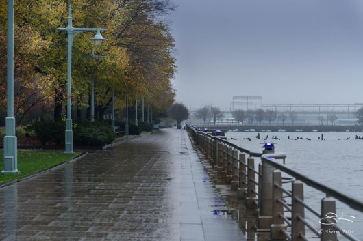 Rain on Hudson River Greenway