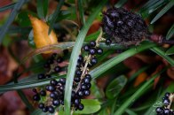Berries in St Luke's