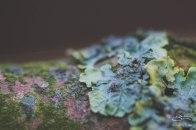 Lichen, London 12/26/2015