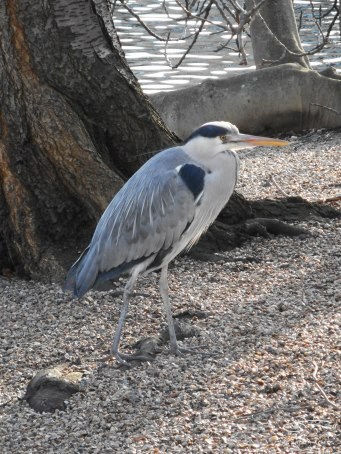Gery Heron, St James Park 12/31/15