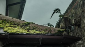 Mossy roof, Thames 11/1/2016