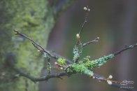 Lichen, WWT London 1/4/2015