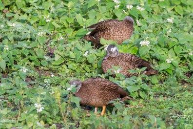 WWT London Wetland 1/4/16