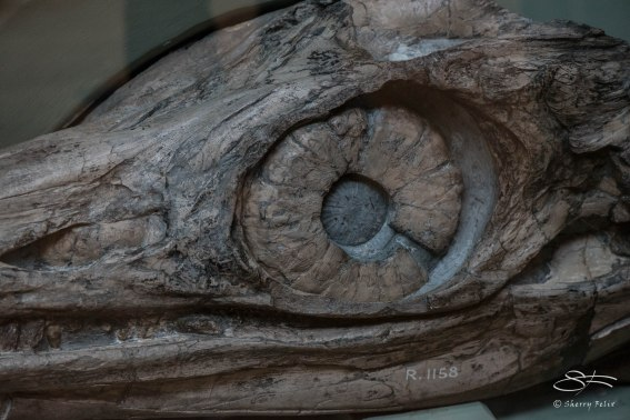 Dionsaur eye, Natural History Museum 12/22/2015
