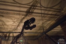 Dinosaur, Natural History Museum 12/22/2015