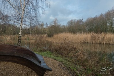WWT London Wetland Center 1/4/2016