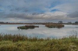 WWT London Wetland Center 1/4/2016