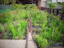 2009-07-03 High Line 25