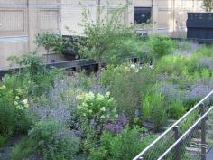 2009-07-03 High Line 30