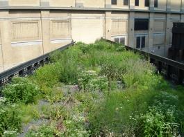 2009-08-03 High Line 07