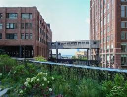 2009-08-03 High Line 10