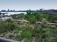 2009-09-07 High Line 13
